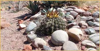 flowering cactus among stones