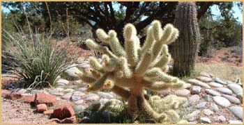 round-fingered cactus in rock garden